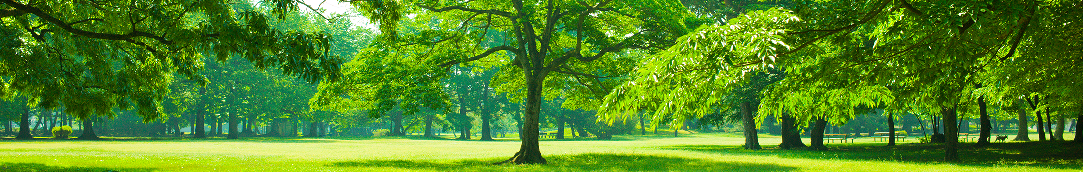 arbor tech tree care header image